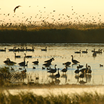New Wetlands Protections in California Proposed